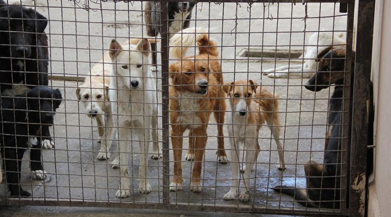 """HUMANITARNA AKCIJA UDRUŽENjA """"ZELENE ŠAPE"""" I OKRUŽNOG ZATVORA: Da životinje dobiju skloništa, a zatvorenici garderobu i obuću"""