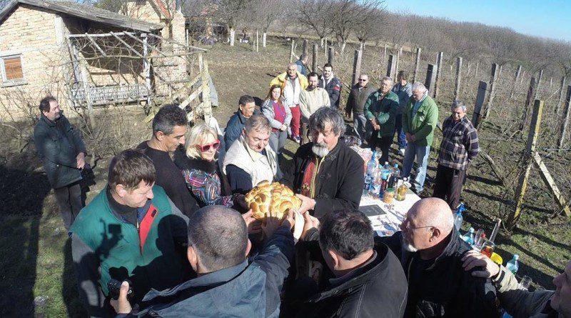 XXX REPORTAZE - 2 Slavski kolac za Sv Trifuna