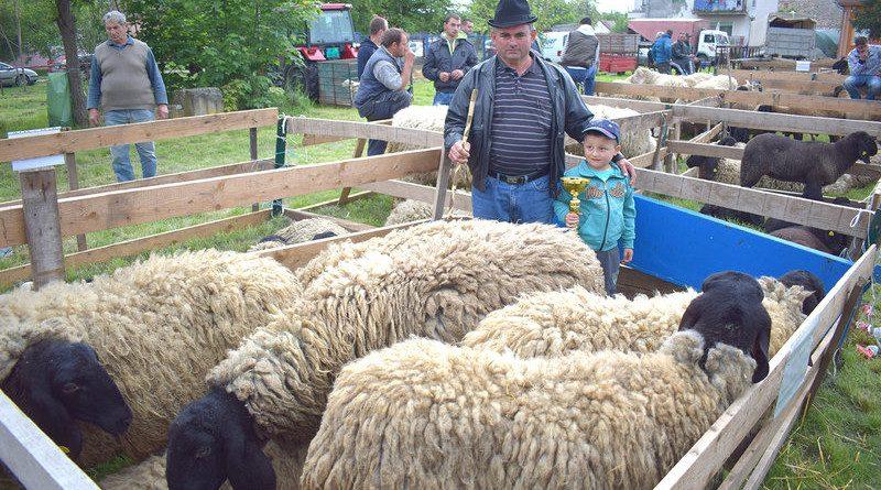 Uspela izložba priplodnih goveda i ovaca u Tomaševcu