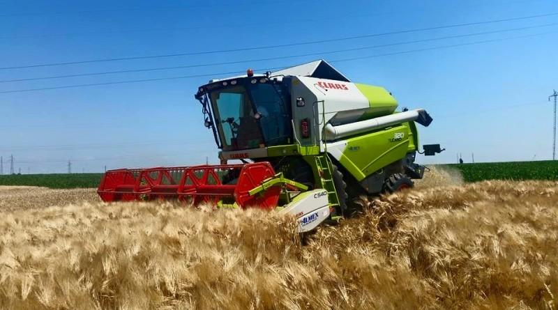 Predate prve količine pokošene pšenice