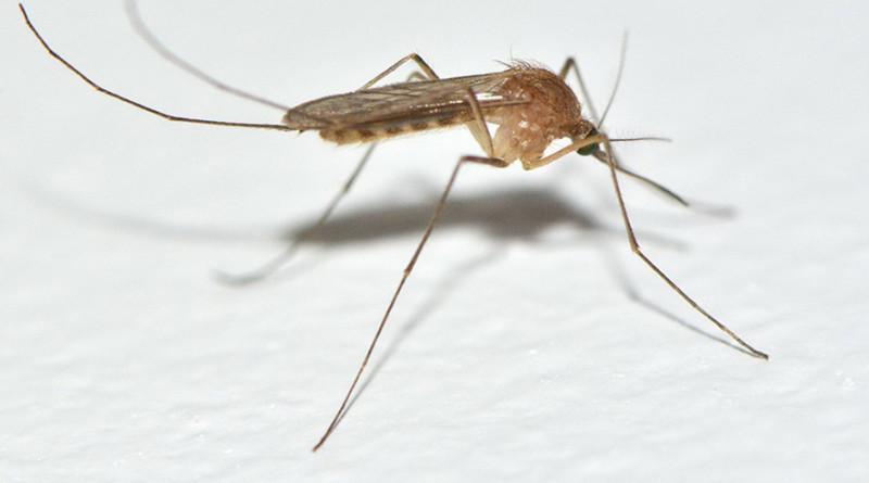 UPOZORENJE PČELARIMA U ZRENJANINU: Počinje suzbijanje komaraca