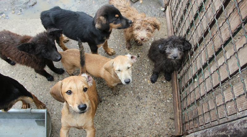 Dečja izložba pasa u nedelju