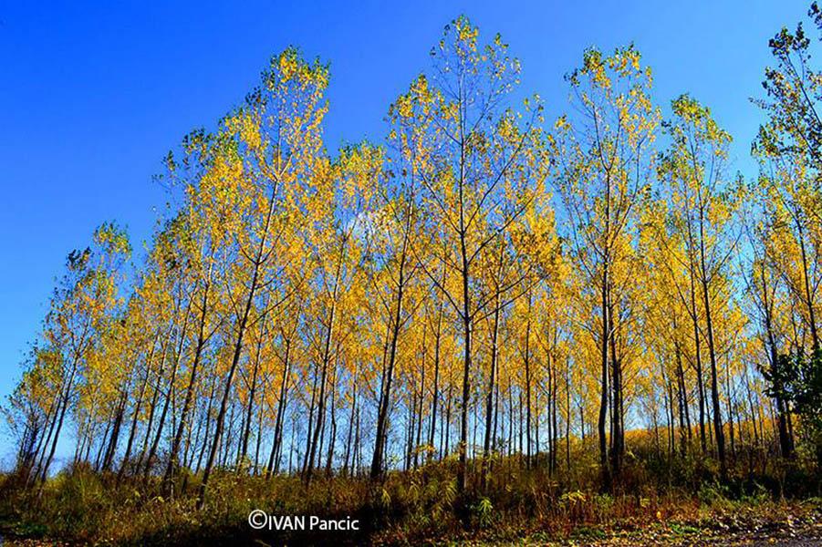 jesen-stigla