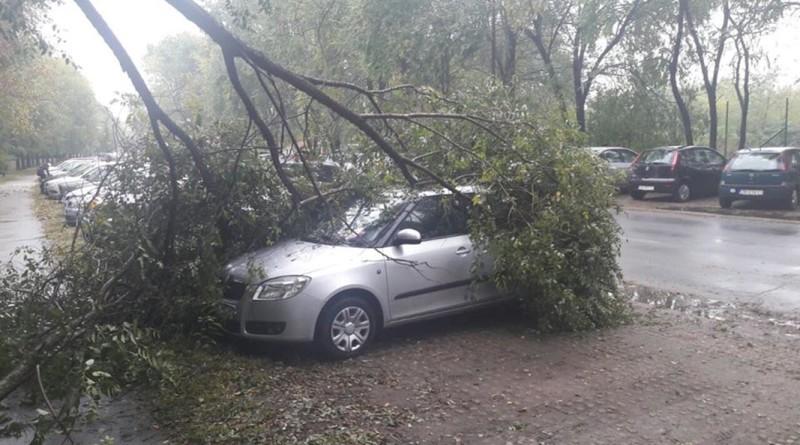 18-1-palo-drvo
