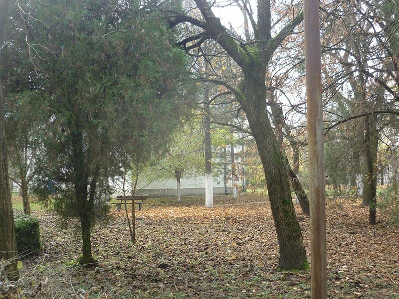 jesen-belo-blato