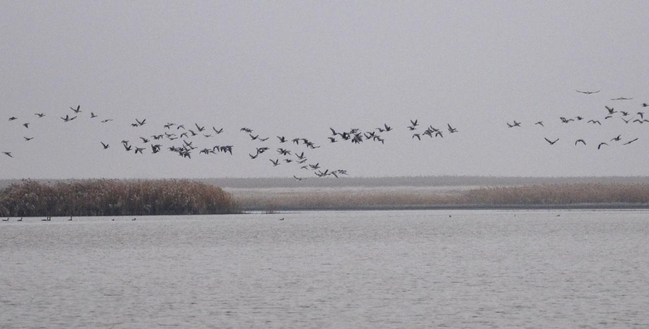 zd-novi-becej-slani-kopovi-zdralovi-i-ptice-1