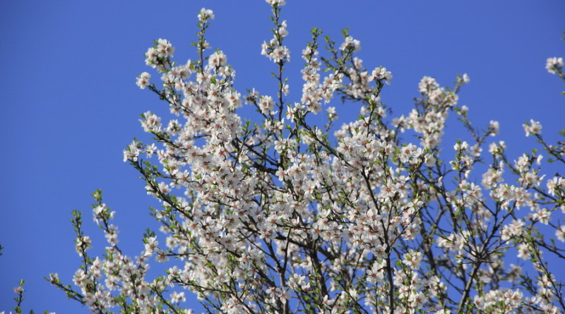 Blistav prolećni dan
