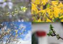 GRAD OKUPAN SUNCEM: Prolećni detalji