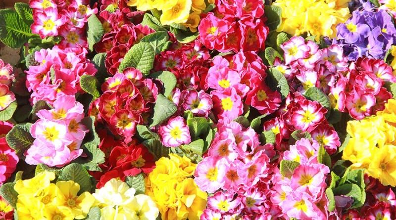 4-ilustracija za sajam cveca