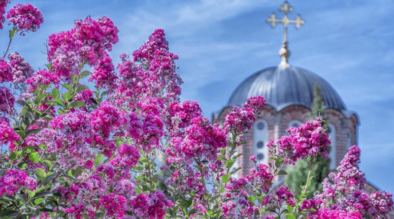 Crkvina u bojama leta
