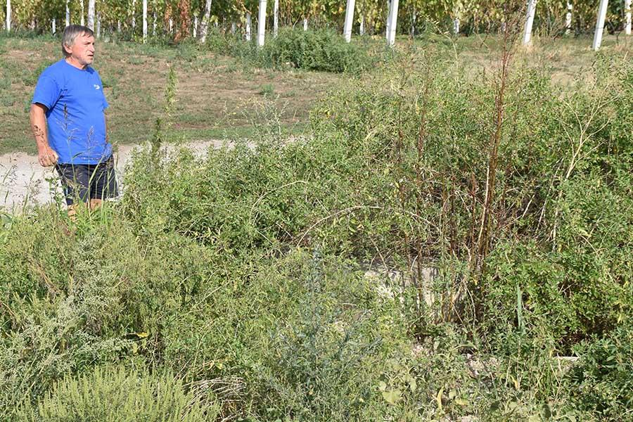 5 - 1 - rusanda dule adamov pokazuje u korov zarasle bunare