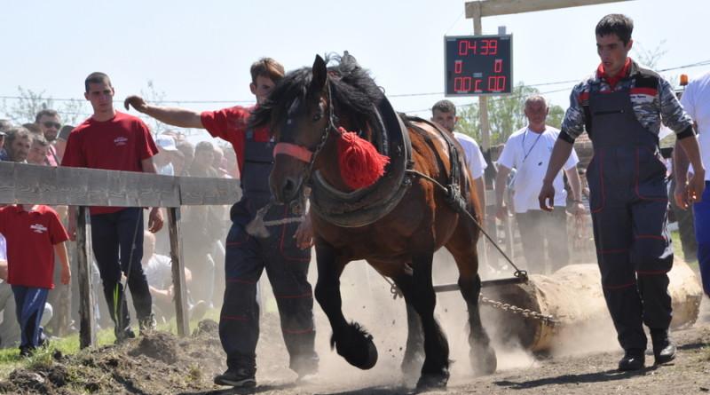 20180422 cestereg III straparijada konj 75 (3)