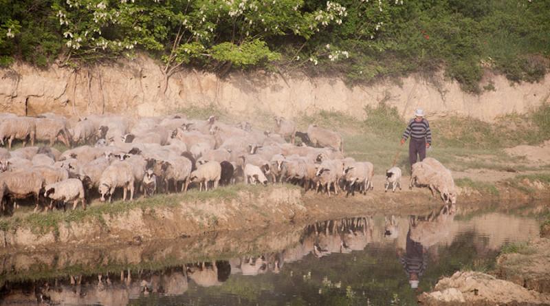 01 20180505 ovce pojilo voda coban (6 of 1)
