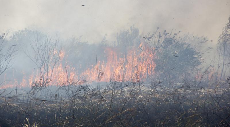 FOTO-GALERIJA: Vatra i dim iz atara zahvatili i Carsku baru