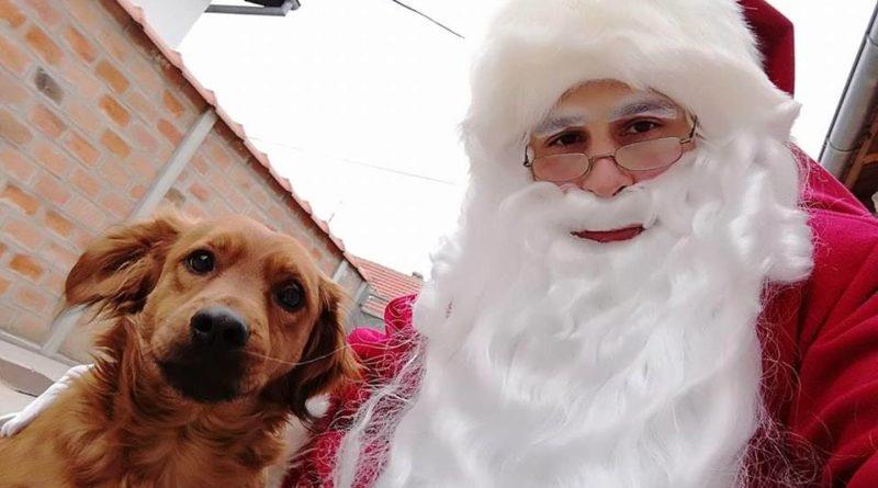 """NOVOGODIŠNJA AKCIJA """"ZELENIH ŠAPA"""": Hrana za napuštene pse i mačke"""