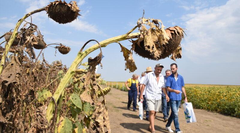 """NA """"ZLATICI"""" ODRŽAN """"DAN POLJA""""  JESENJIH KULTURA: Dobre prognoze za kukuruz i suncokret, skromnije za soju"""