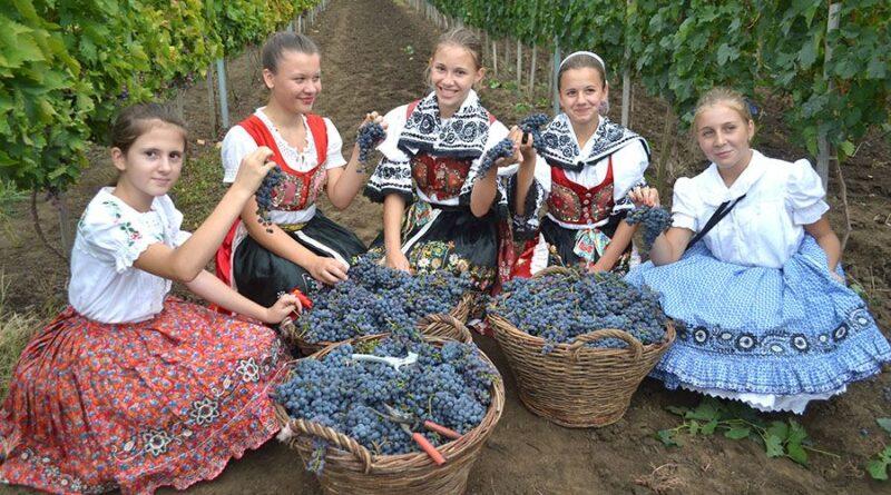 U ARADCU OVOG VIKENDA VESELO: Proslava vina i narodnih običaja