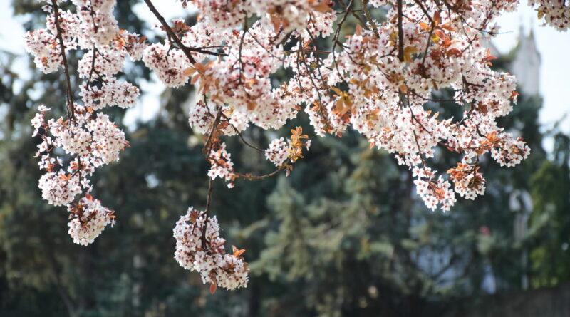 FOTO-GALERIJA: Proleće
